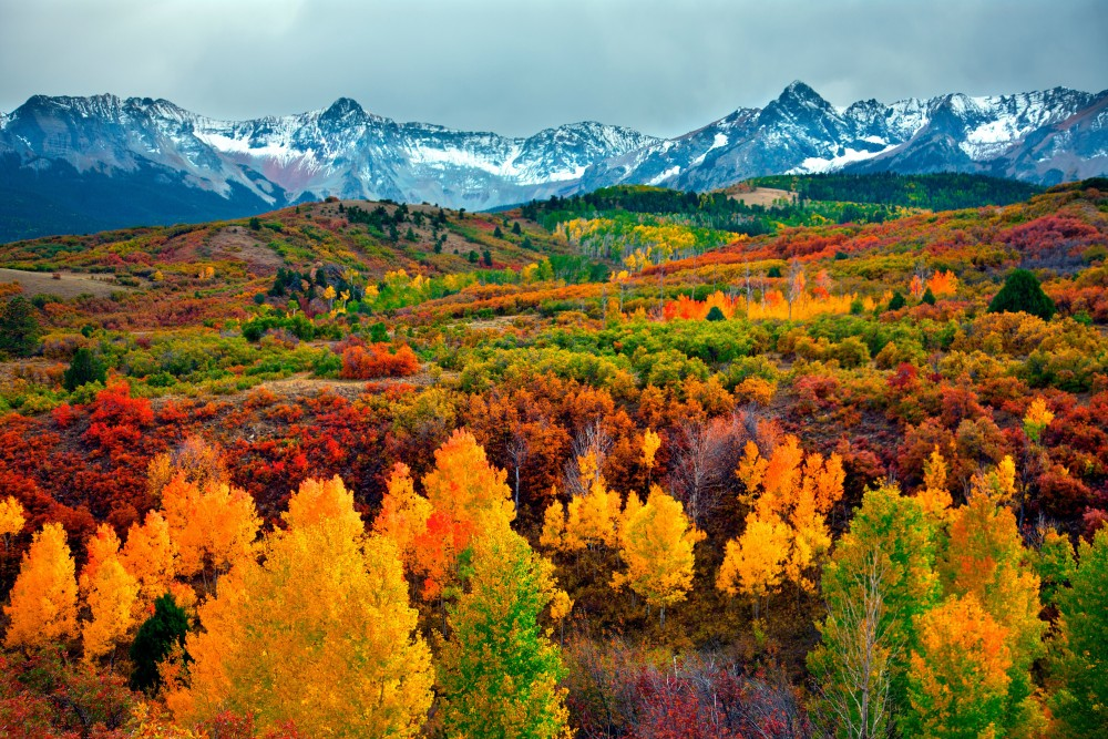 colorado-fall-aspen